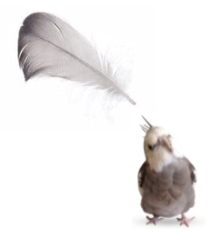 Shannon Cutts Pearl Feather Logo